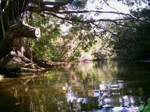 paddle Estero River. Great Calusa Blueway, kayak, canoe