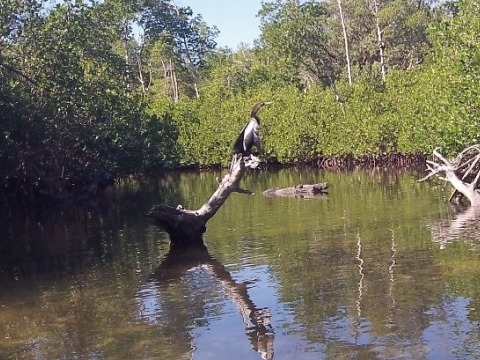 paddling sanibel Island, Ding Darling, Wildlife