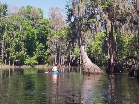 paddle Shingle Creek, Kissimmee