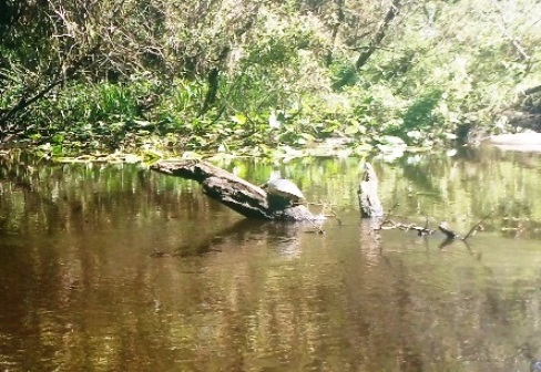 paddling Little Manatee River, wildlife, kayak, canoe