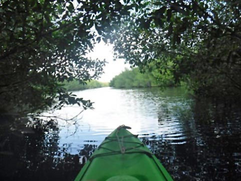 Paddle Everglades, East River - Kayak, Canoe
