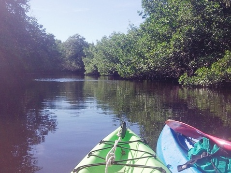 Paddle Everglades, Big Cypress, Halfway Creek - Kayak, Canoe