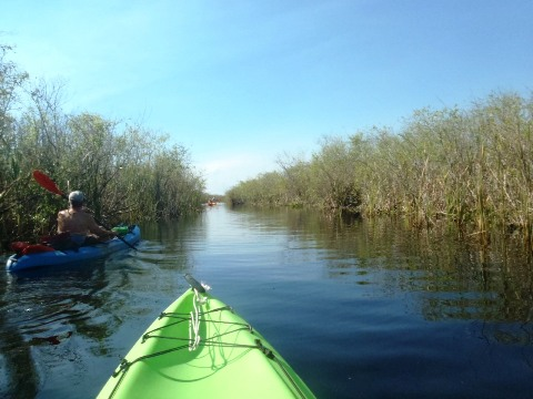 Paddle Everglades, Loxahatchee National Wildlife Refuge - Kayak, Canoe