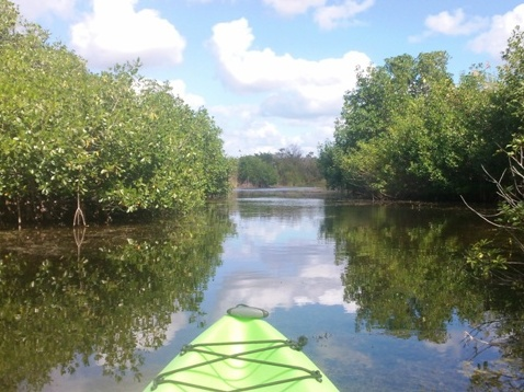 paddle, kayak, canoe, Turner River-Big Cypress-Everglades