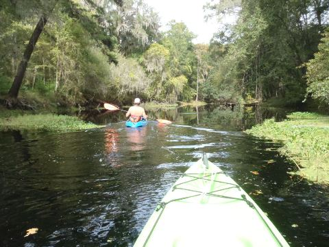 paddling Santa Fe River, River Rise to High Springs, kayak, canoe
