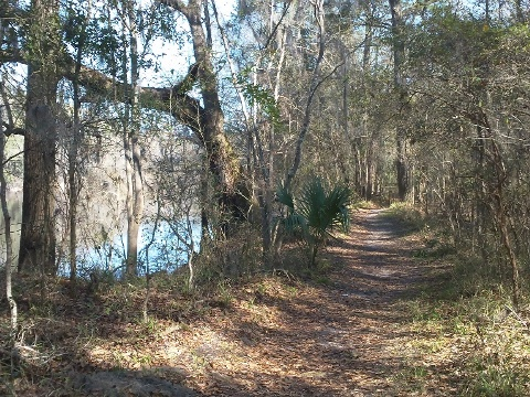 Suwannee River State Park