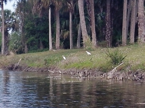 Paddling Loxahatchee River, wildlife