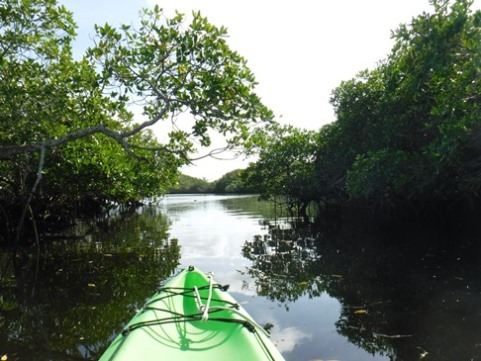 paddle Locahatchee River North at Jonathan Dickinson State Park, kayak, canoe