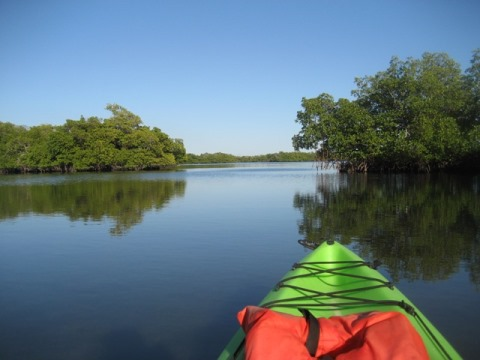 Rookery Bay, South FL paddling